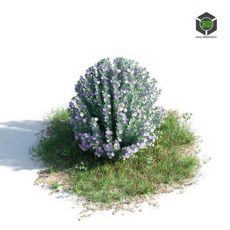 AM_154_036_Leucophyllum_Frutescens (3ddanlod.ir)
