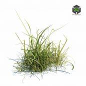 037_simple_grass_v1 (3ddanlod.ir)