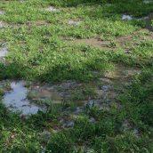 Cajuns_Grass_Pack(big_puddles)_preview01 (3ddanlod.ir)