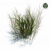 068_simple_grass_v2 (3ddanlod.ir)
