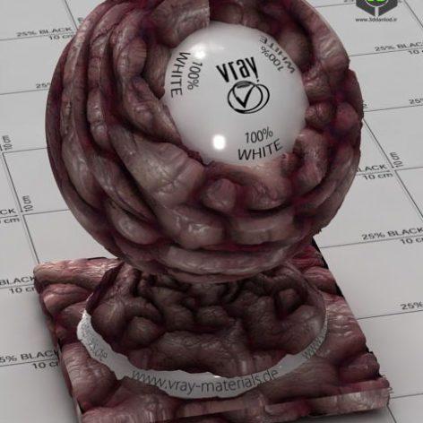 Brains_by_ccybul001_xl_2771 (3ddanlod.ir)