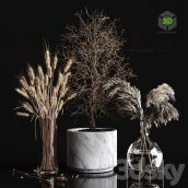 Dry Plants Collection(3ddanlod.ir) 680