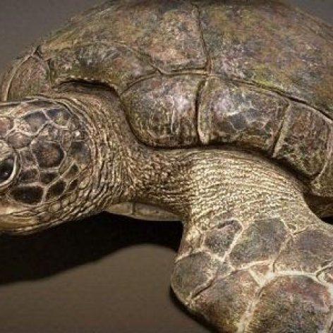 Ancient Green Turtle 3D Model (3ddanlod.ir)