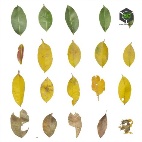 Bush_Leaf_pjyfa2_atlas_Preview (3ddanlod.ir)