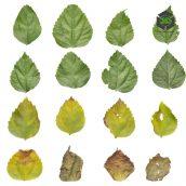 Bush_Leaf_pjygw2_atlas_Preview (3ddanlod.ir)
