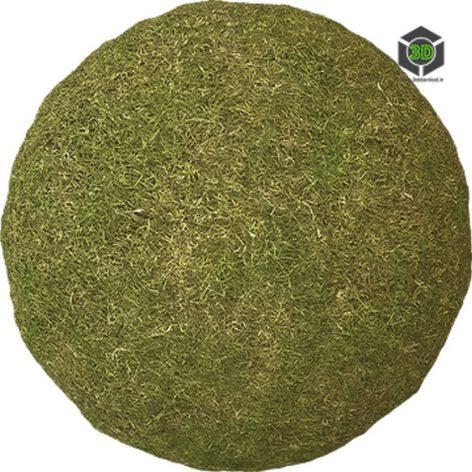 Grass_Cut_ogiqw0_surface_Preview (3ddanlod.ir)