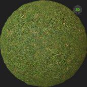 Grass_Uncut_oiloP20_surface_Preview (3ddanlod.ir)