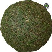 Grass_Uncut_pjwgf0_surface_Preview (3ddanlod.ir)