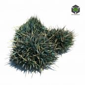 086_Decorative_grass_v2 (3ddanlod.ir)
