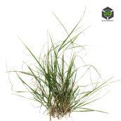 Grass_Lawn_rfjje0a2_atlas_Preview (3ddanlod.ir)