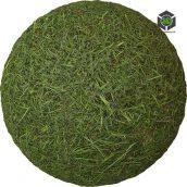 Grass_Wild_oilpt20_surface_Preview (3ddanlod.ir)