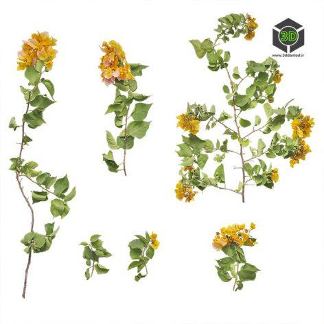 Plant_Annuals_pgimD2_atlas_Preview (3ddanlod.ir)