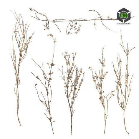 Plant_Annuals_qeBhg2_atlas_Preview (3ddanlod.ir)