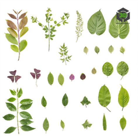 Plant_Assorted_ojfnk2_atlas_Preview (3ddanlod.ir)