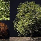 A Tree In Green And Autumn Colours 3D Model (3ddanlod.ir)