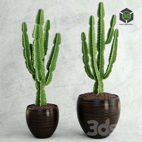 Cactus Euphorbia Ingens(3ddanlod.ir) 181