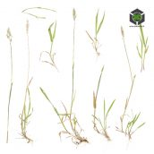Grass_Wild_okEiR2_atlas_Preview (3ddanlod.ir)
