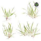 Grass_Wild_olcfq2_atlas_Preview (3ddanlod.ir)
