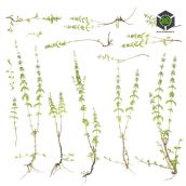 Plant_Annuals_olclG2_atlas_Preview (3ddanlod.ir)
