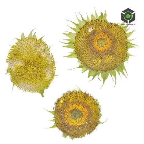 Plant_Annuals_pgcml2_atlas_Preview (3ddanlod.ir)