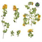 Plant_Annuals_pgimD2_atlas_Preview(3ddanlod.ir)