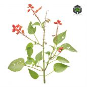 Plant_Assorted_pgjkl2_atlas_Preview (3ddanlod.ir)
