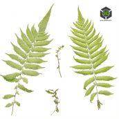 Plant_Ferns_olzlK2_atlas_Preview (3ddanlod.ir)