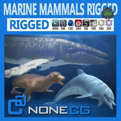 cgtrader Pack Marine.Mammals.3D.model008 cover (3ddanlod.ir)