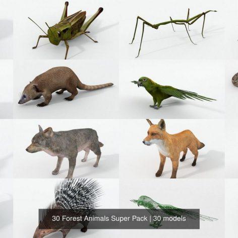 cgtrader-Pack.-30.Forest.Animals.Super.Pack.3D.Model001(3ddanlod.ir)