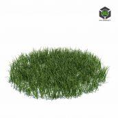 105_simple_grass_large_v3 (3ddanlod.ir)