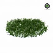 108_simple_grass_large_v3 (3ddanlod.ir)