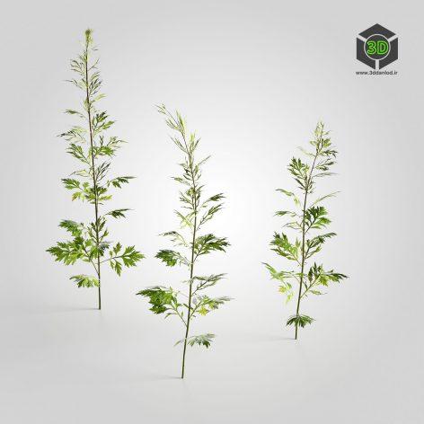 AM226_002_Artemisia(3ddanlod.ir)