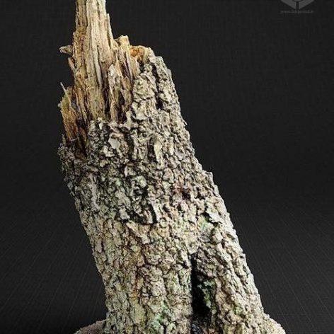 Birch Trunk-01 3d Model (3ddanlod.ir)