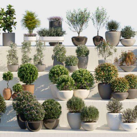Globe Plants – Bundle 01 – Ornamental and Decorative Pot Plants003 cover (3ddanlod.ir)