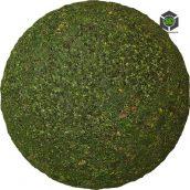 Grass_Wild_pjwky20_surface_Preview (3ddanlod.ir)