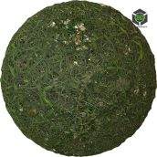 Grass_Wild_pjwon20_surface_Preview (3ddanlod.ir)