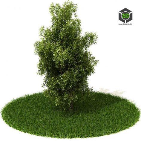 دانلود آبجکت درخت 1039