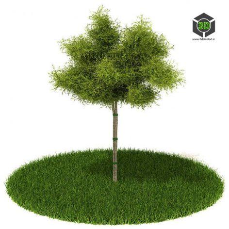 دانلود آبجکت درخت 1040