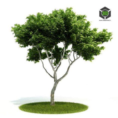 دانلود آبجکت درخت 1035