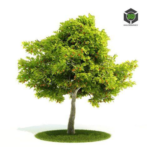 دانلود آبجکت درخت 1036
