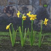 AM214_019_Narcissus(3ddanlod.ir)