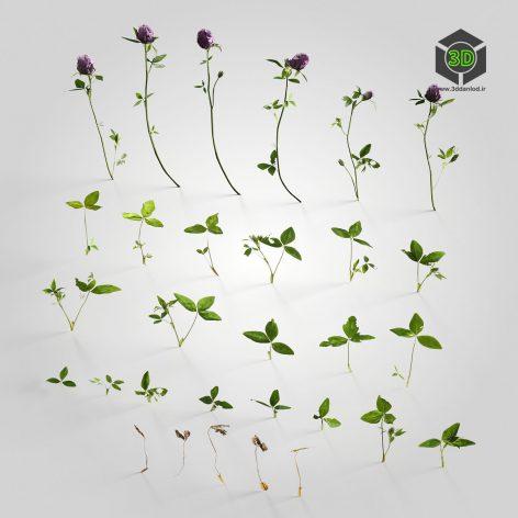 AM226_007_Trifolium(3ddanlod.ir)