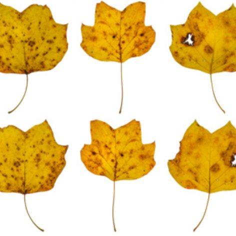LeavesFall011 (3ddanlod.ir)