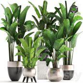 Plant Collection 308(3ddanlod.ir) 808