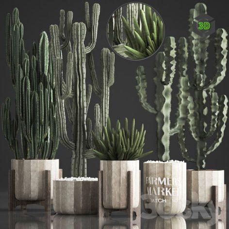 Plant Collection 374(3ddanlod.ir) 1005