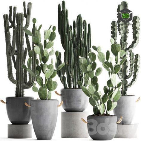 Plant Collection 386(3ddanlod.ir) 1059