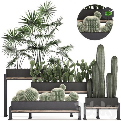 Plant Collection 462(3ddanlod.ir) 1304