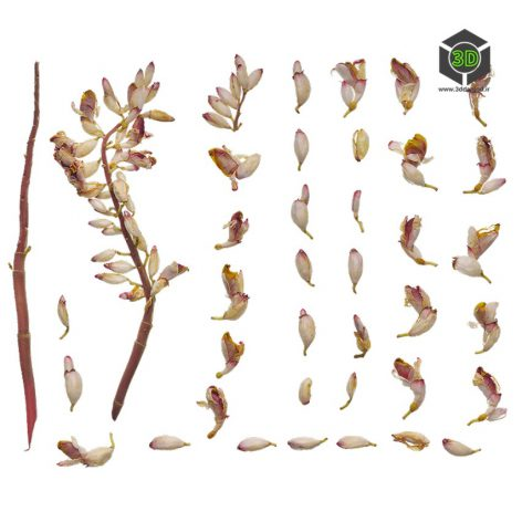 Plant_Flower_qfBlq2_atlas_Preview (3ddanlod.ir)