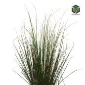 Plant_Grass_qhetk2_atlas_Preview (3ddanlod.ir)