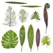 Plant_Perennials_ocskq2_atlas_Preview (3ddanlod.ir)